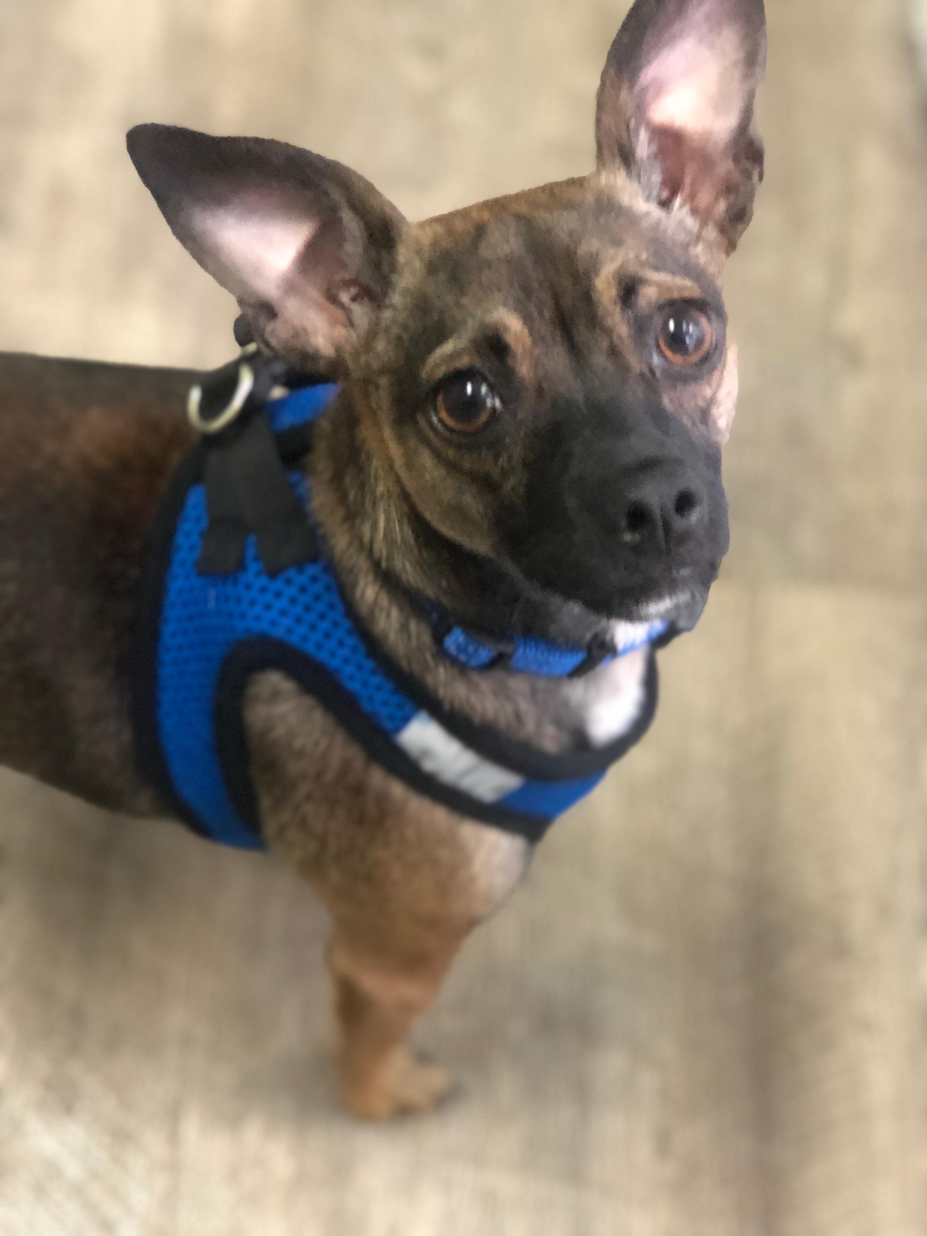 The Pet Adoption Center Of Orange County