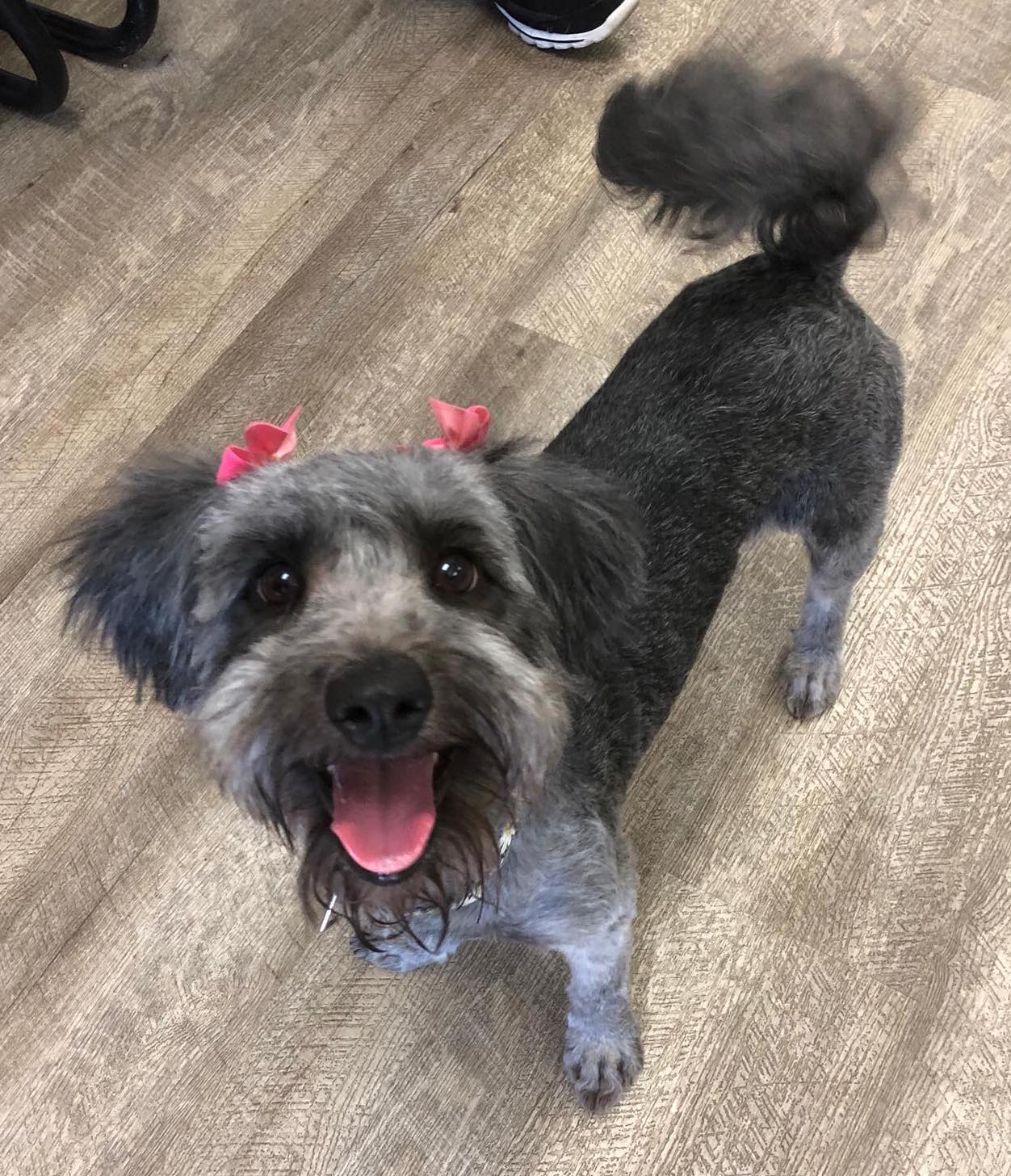 Happy Tails – The Pet Adoption Center of Orange County